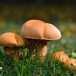 The New Mushroom Coffee Craze: Some Essential Facts And Figures